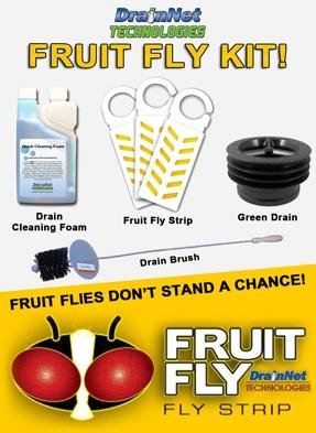 Fruit Fly Control for restaurants